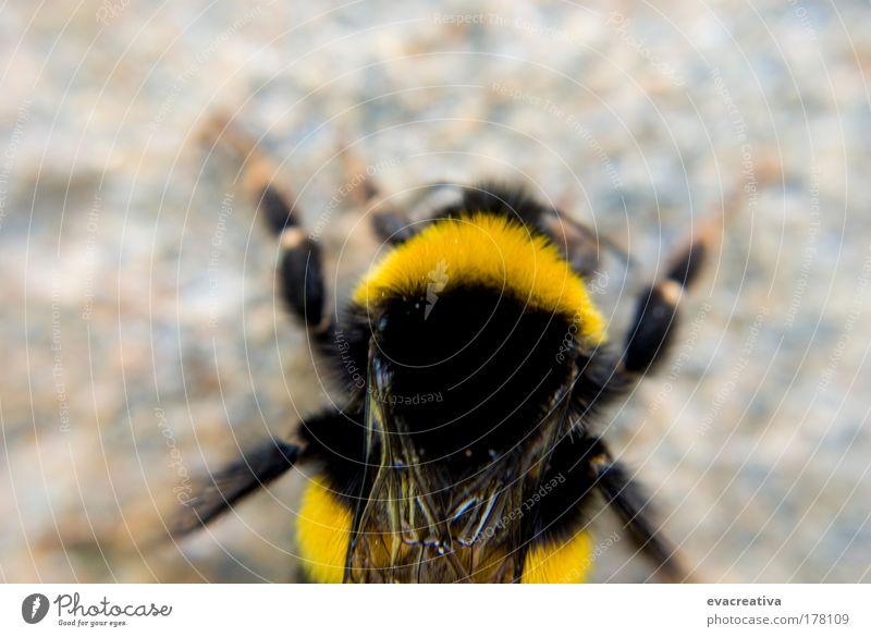 Animal Movement Cool (slang) Bee