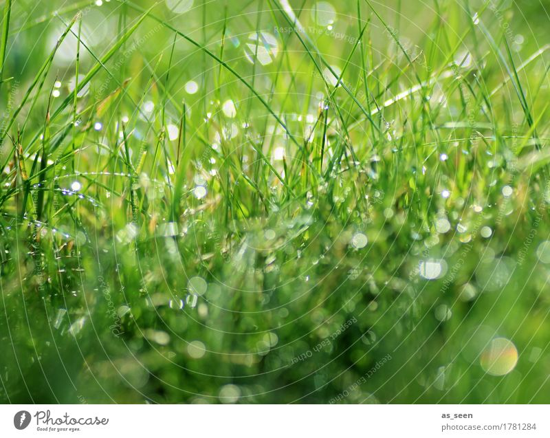 drop symphony Healthy Life Harmonious Senses Camping Summer Nature Plant Elements Water Drops of water Spring Grass Leaf Blade of grass Meadow Garden Glittering