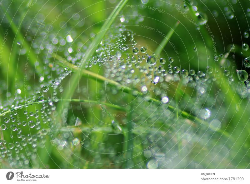 glitter web Beautiful Wellness Life Spa Garden Environment Nature Elements Water Drops of water Spring Summer Climate Weather Rain Plant Grass Grass meadow