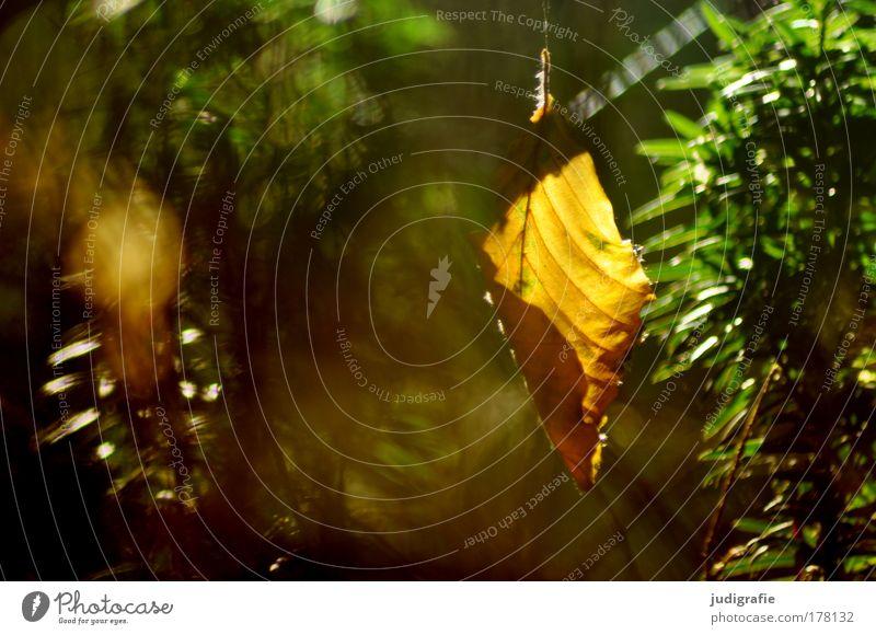 Nature Tree Plant Summer Leaf Forest Autumn Happy Environment Transience Idyll Illuminate