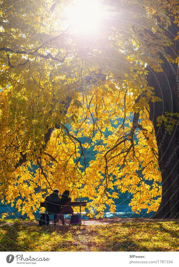 Together Leisure and hobbies Human being Friendship Couple Partner Life 2 18 - 30 years Youth (Young adults) Adults Bright Autumn Deciduous tree Gold Oak leaf