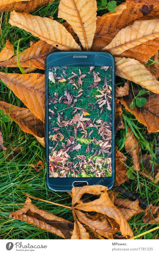 Leaf Environment Meadow Grass Idyll Telecommunications Photography Internet Cellphone Camera Autumn leaves Screen PDA Take a photo Hardware High-tech