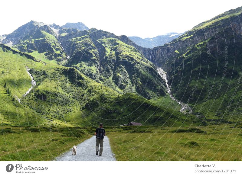 Human being Dog Nature Man Summer Green Landscape Animal Far-off places Mountain Adults Grass Going Masculine Illuminate Hiking