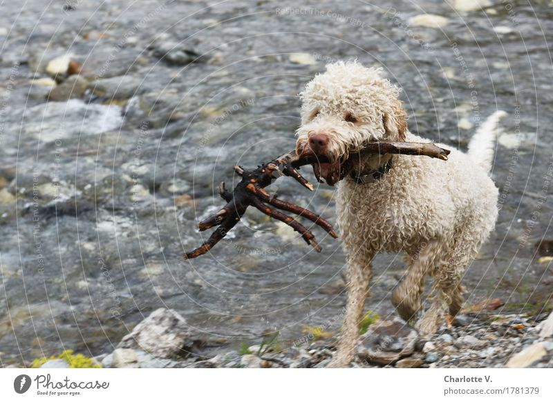 Dog Nature Water White Animal Cold Movement Wood Playing Gray Stone Swimming & Bathing Brown Going Power Success