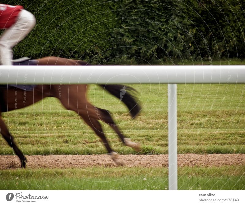 western from yesterday Colour photo Exterior shot Copy Space right Copy Space top Joy Happy Ride Sports Equestrian sports Sportsperson Cup (trophy) Success