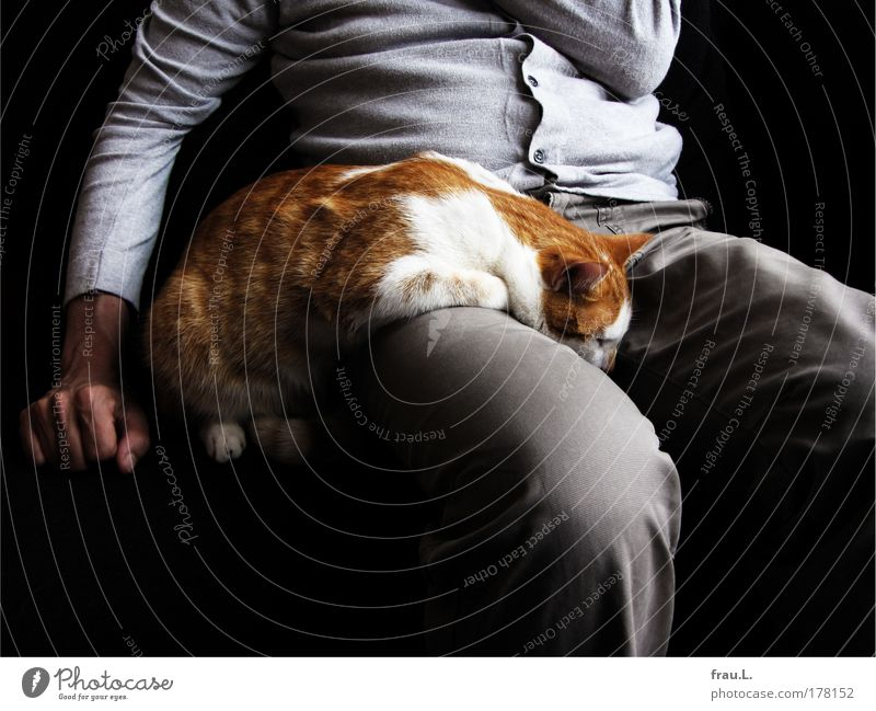 dozed off Colour photo Interior shot Day Masculine Man Adults Arm Hand Stomach Legs Animal Pet Cat 1 Touch To enjoy Lie Sleep Sit Together Cuddly Warmth Soft
