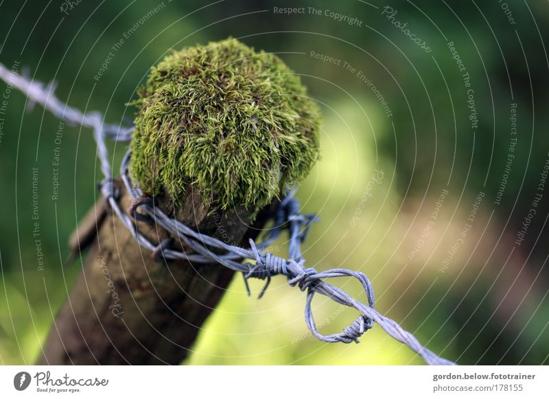 behind thorns Colour photo Exterior shot Deserted Copy Space right Day Shallow depth of field Bird's-eye view Nature Animal Summer Plant Tree Moss Field Bog