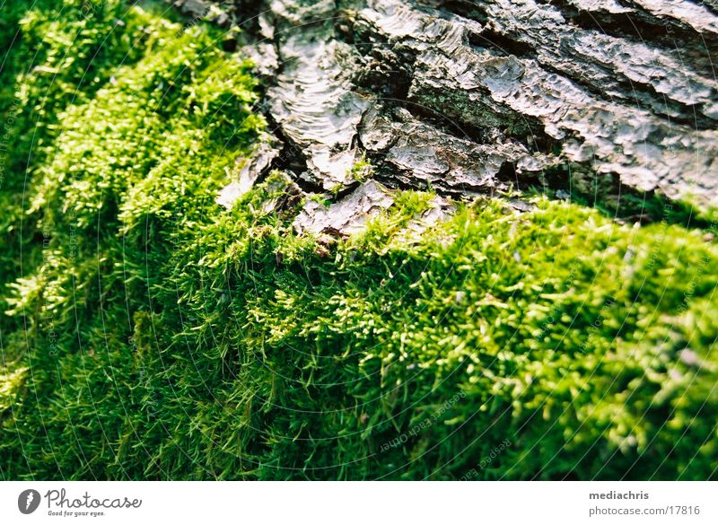 Tree Moss Tree bark Eifel Maria Laach Abbey Laacher Lake
