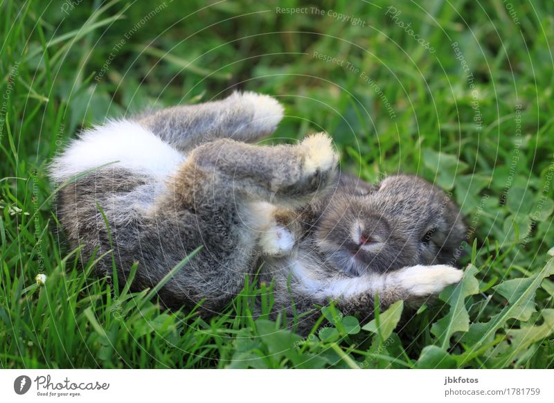 Is it Friday yet? Food Nutrition Environment Nature Animal Garden Park Meadow Pet Farm animal Wild animal Animal face Pelt Claw Paw Hare & Rabbit & Bunny