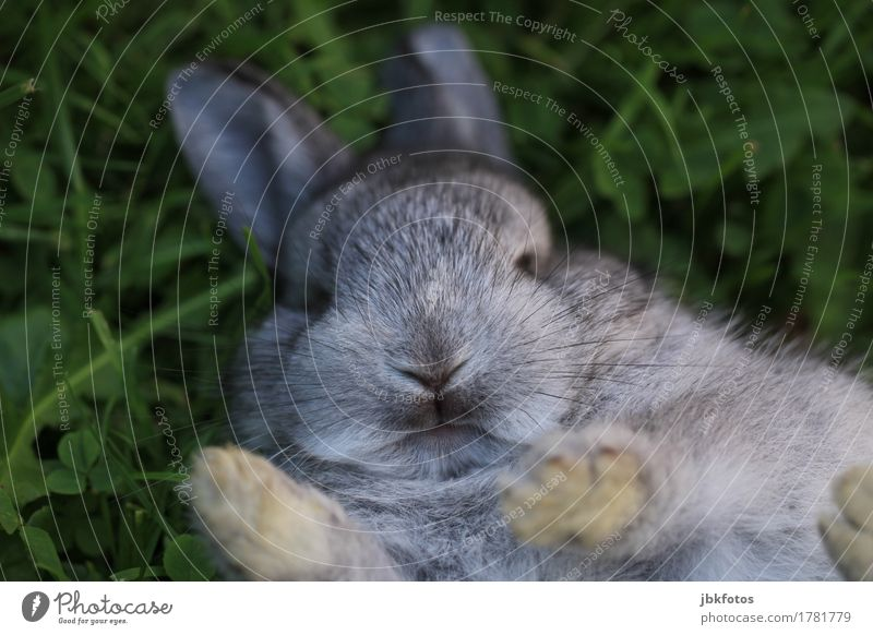 nothing with pre-Christmas stress Food Nutrition Animal Pet Farm animal Wild animal Hare & Rabbit & Bunny Baby animal Beautiful Uniqueness Cuddly Gray Silver