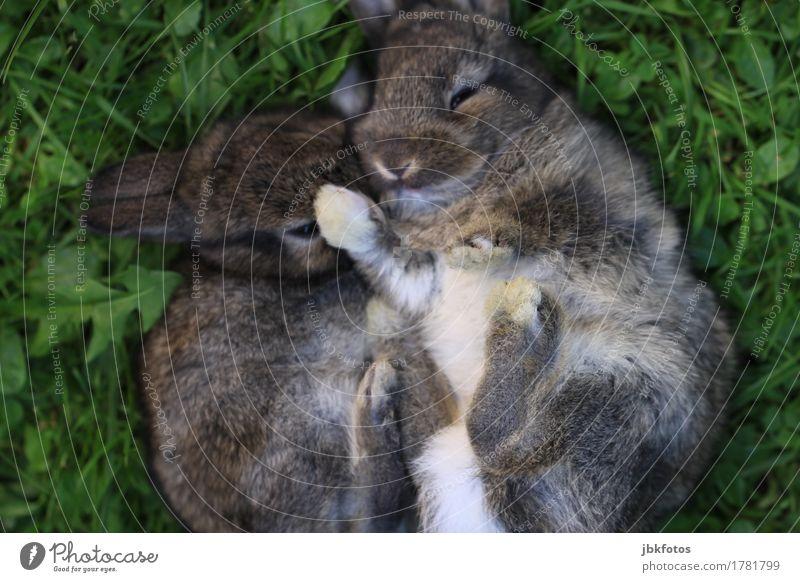 finally F R E ! T A G !!! Food Meat Nutrition Environment Nature Animal Pet Farm animal Wild animal Animal face Pelt Claw Paw Hare & Rabbit & Bunny Pygmy rabbit