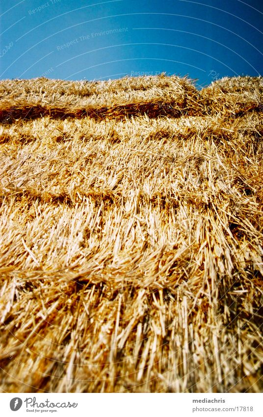 hay bales Straw Bale of straw Detail Blade of grass Blue sky fur