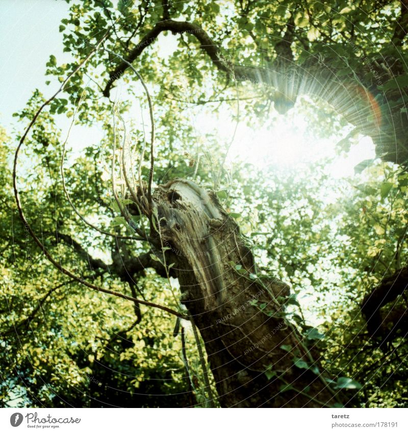 Nature Sky Tree Sun Green Blue Plant Summer Colour Happy Dream Moody Brown Environment Energy Time