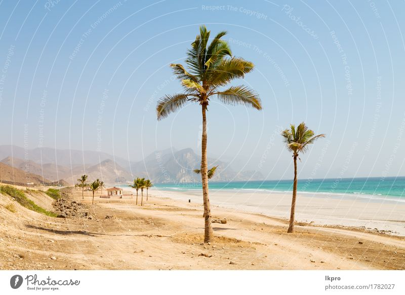 palm and mountain in oman arabic sea the hill Vacation & Travel Tourism Summer Sun Beach Ocean Culture Environment Nature Landscape Plant Sand Sky Horizon Leaf