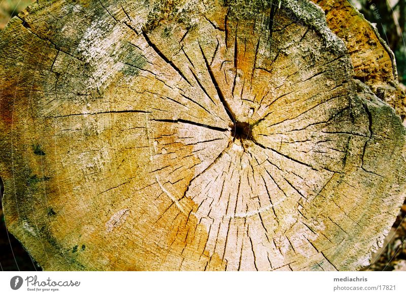annual rings Wood Annual ring Tree Tree trunk Old Crack & Rip & Tear Colouring Surface Cross-section Close-up