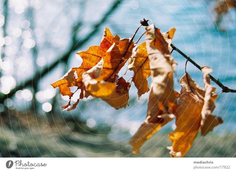rustling leaves Maria Laach Abbey Laacher Lake Leaf Limp
