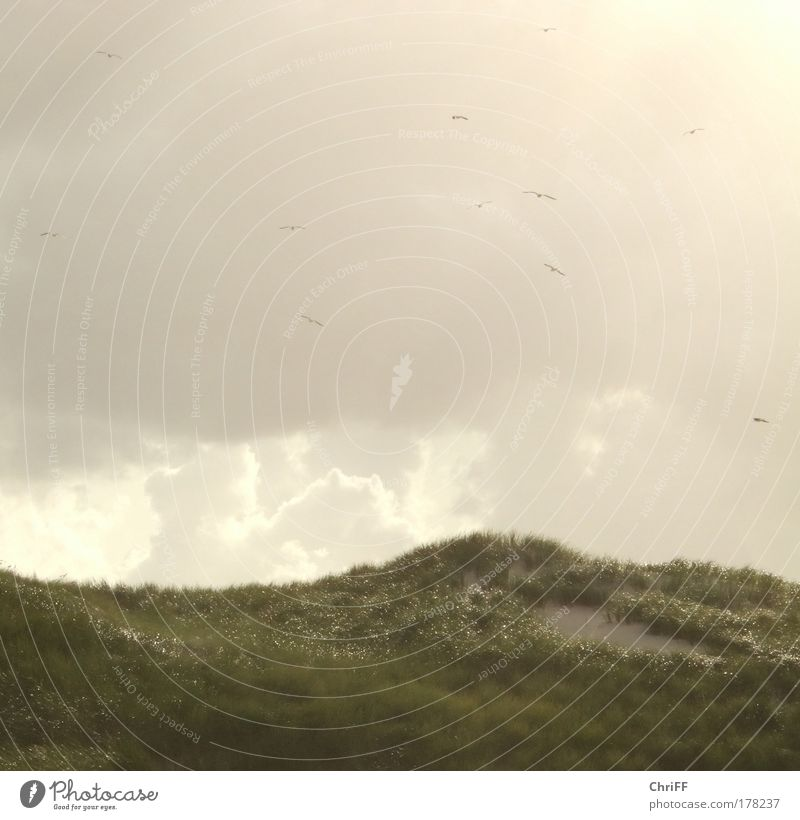 Free as birds in the wind Vacation & Travel Freedom Nature Sand Clouds Sunlight Summer Wind Marram grass Meadow Hill Beach North Sea Island Amrum Beach dune