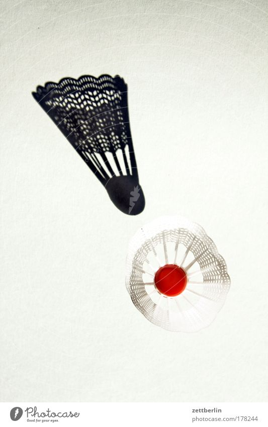 badminton Badminton detail thing Image Shadow Shuttlecock free time object Interior shot item recording Dimension game Sports dwell Copy Space