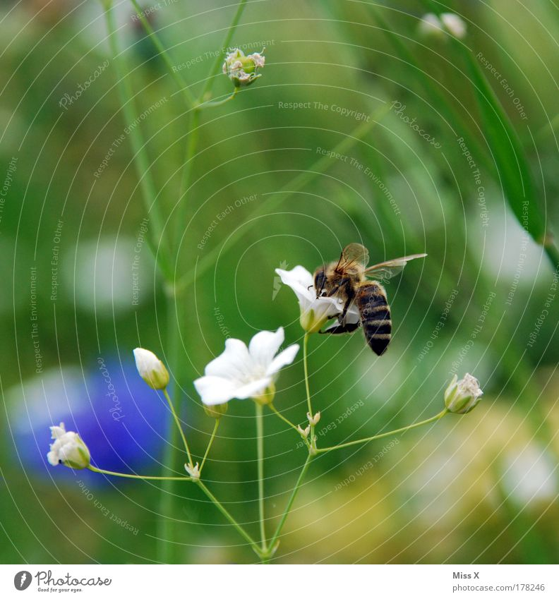 Nature Flower Plant Nutrition Animal Meadow Blossom Grass Park Field Small Environment Flying Wing Insect Animal portrait
