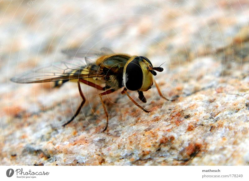 Nature Black Animal Yellow Freedom Stone Brown Fly Flying Wing Bee Wasps