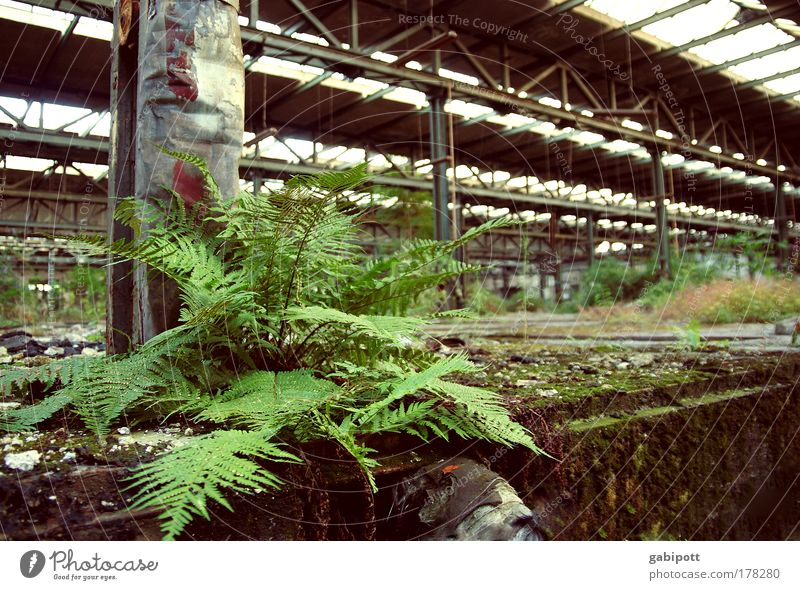 UrbanFern Colour photo Interior shot Close-up Deserted Day Wide angle Plant Fern leaf Industrial plant Manmade structures Building Hall Warehouse Going Ruin