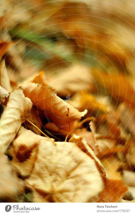Nature Old Beautiful Tree Plant Animal Leaf Calm Environment Landscape Death Autumn Sadness Dream Field Gold