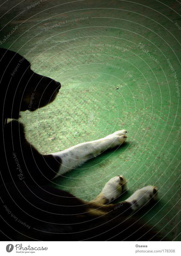 White Green Black Animal Relaxation Head Dog Legs Metal Break Ground Floor covering Lie Pelt Mammal Tin