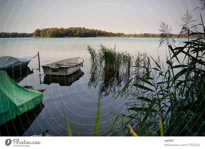 Nature Plant Summer Water Landscape Calm Far-off places Forest Environment Grass Germany Lake Horizon Idyll Bushes Climate