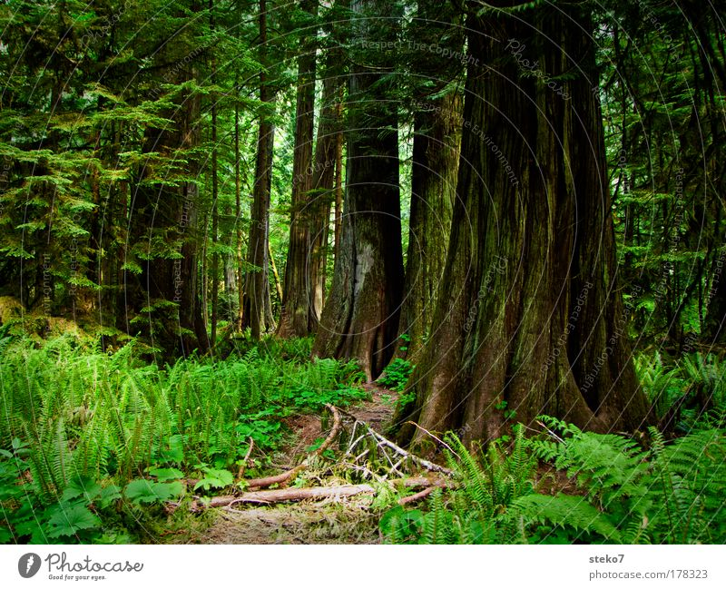 Nature Old Tree Green Calm Loneliness Forest Relaxation Wood Landscape Contentment Power Environment Large Idyll North America