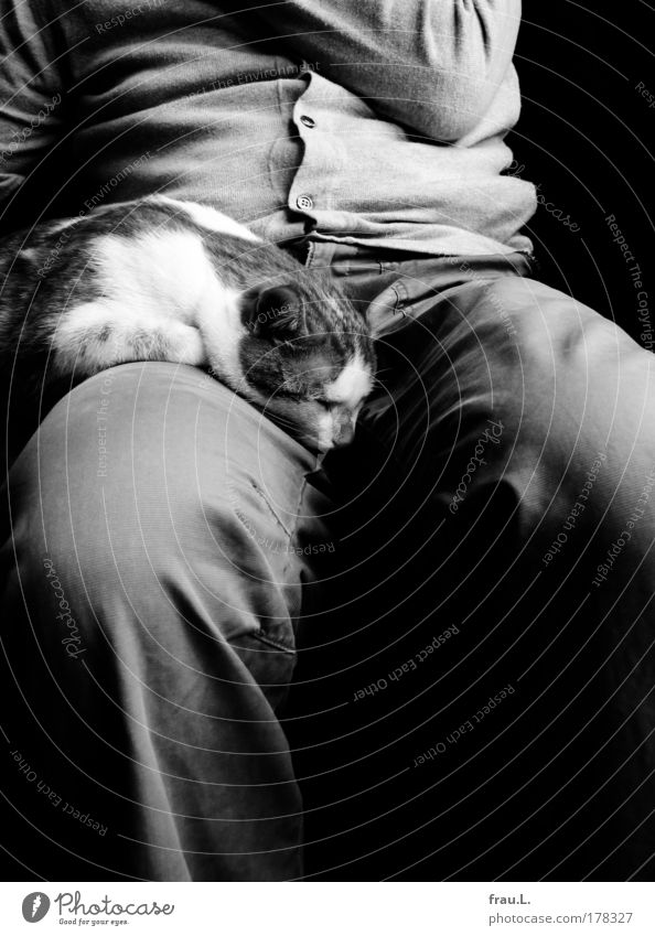 in twos Interior shot Day Deep depth of field Human being Male senior Man Stomach Legs 1 Pants Jacket Cat Animal Sleep Sit Dream Together Contentment
