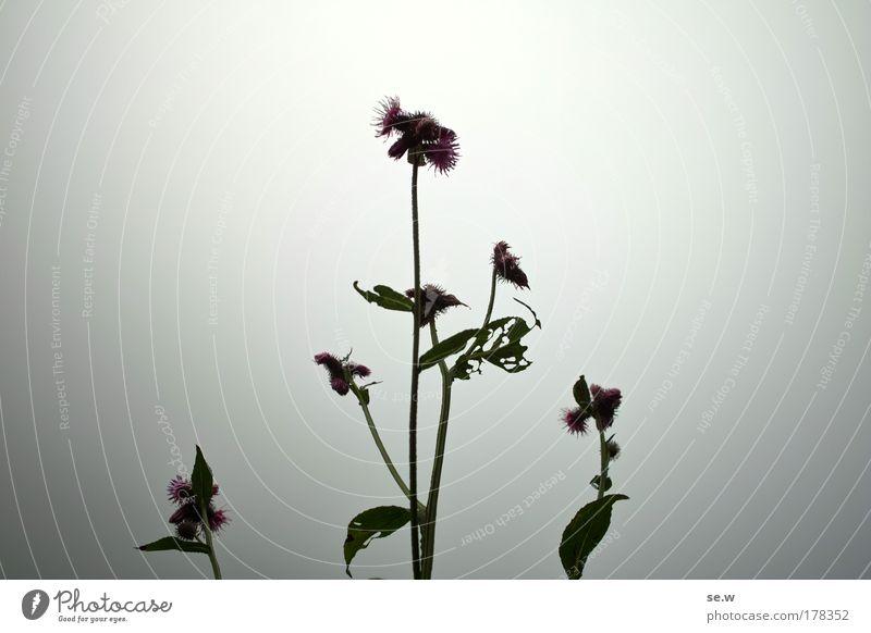 Somehow enlightened Colour photo Close-up Deserted Silhouette Fog Plant Wild plant Nature Back-light E5