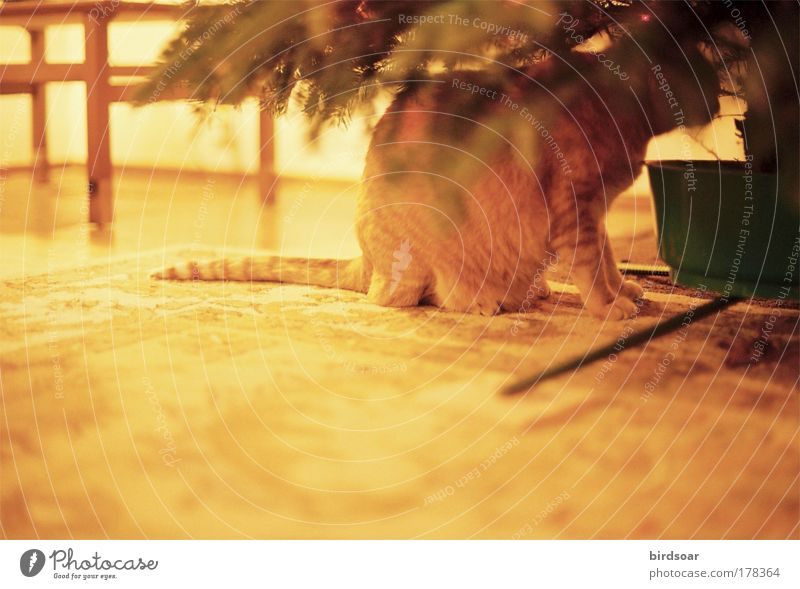 It's Been Awhile Colour photo Interior shot Deserted Evening Contrast Central perspective Animal portrait Pet Cat 1 Safety (feeling of) Warm-heartedness