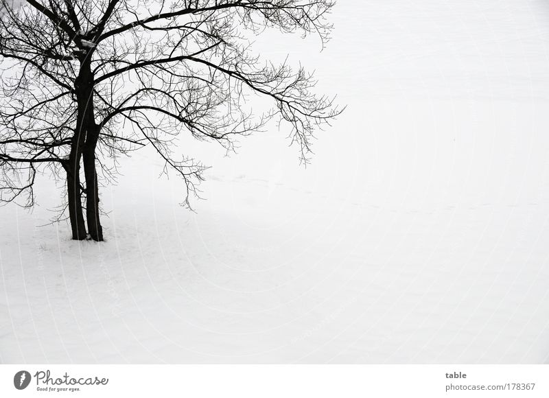 Nature White Tree Plant Joy Winter Black Loneliness Cold Snow Relaxation Emotions Wood Landscape Ice Environment