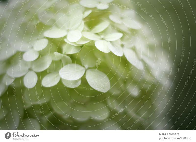 Nature White Beautiful Plant Summer Leaf Animal Environment Landscape Snow Blossom Dream Elegant Esthetic Authentic Future