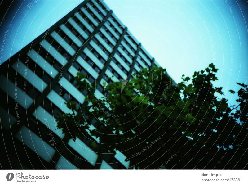 Tree Blue Summer House (Residential Structure) Building Flat (apartment) Horizon Living or residing Manmade structures Cross processing Cloudless sky