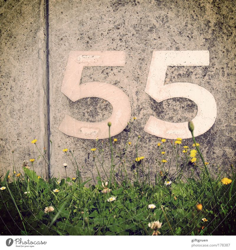 caesium Spring Summer Plant Flower Grass Blossom Wall (barrier) Wall (building) Arrangement Orientation Signs and labeling 55 fifty-five Digits and numbers
