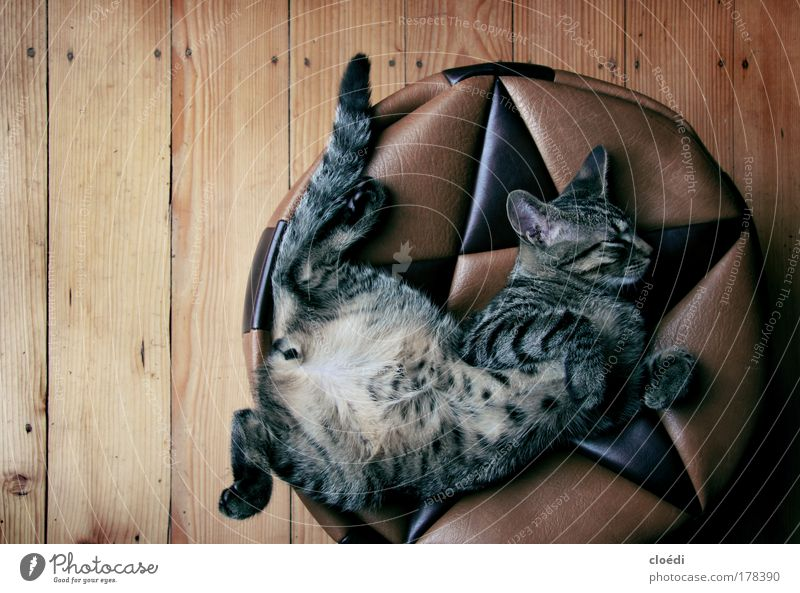 Beautiful Animal Hair and hairstyles Cat Masculine Sleep Human being Animal face Animal portrait Closed eyes Interior shot Paw Pet Profile