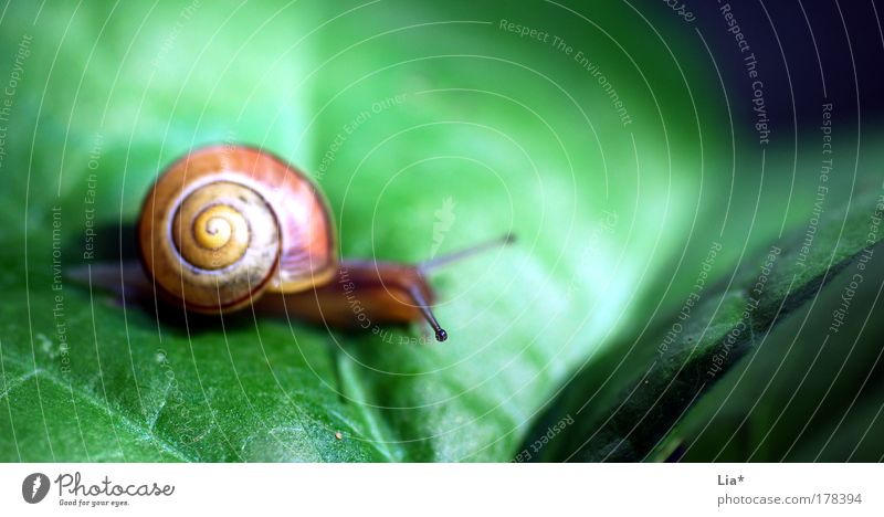 deliberate Colour photo Multicoloured Exterior shot Close-up Detail Macro (Extreme close-up) Shallow depth of field Snail 1 Animal Yellow Green Patient Calm