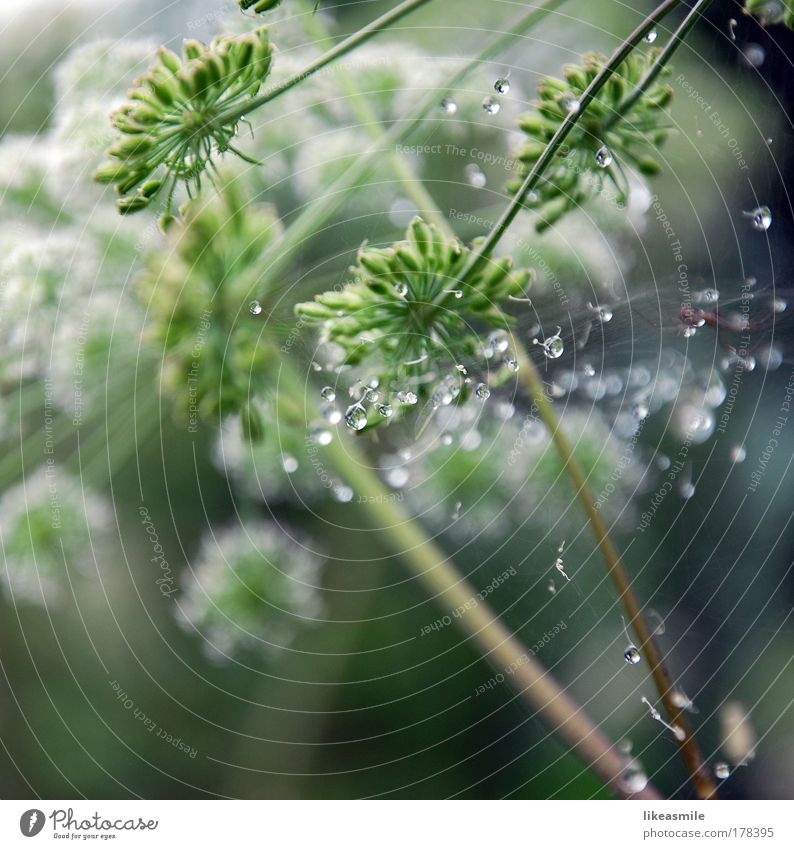 Nature Flower Green Plant Summer Meadow Grass Rain Drops of water Fresh Morning Water Reflection Foliage plant Wild plant