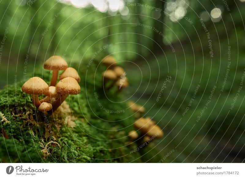 Nature Plant Green Tree Forest Environment Autumn Small Brown Growth Mushroom Moss Mushroom cap