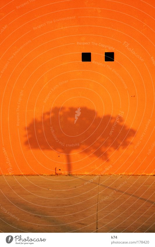 Nature Tree Calm Colour Wall (building) Wall (barrier) Orange Shadow Point Illuminate