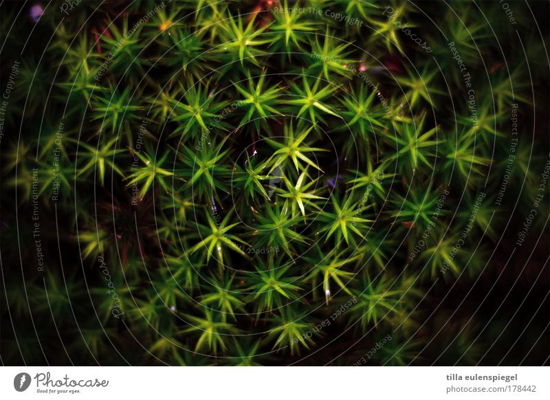 * Colour photo Exterior shot Pattern Deserted Nature Animal Plant Moss Foliage plant Dark Natural Green Black Bizarre Exotic Symmetry Star (Symbol)