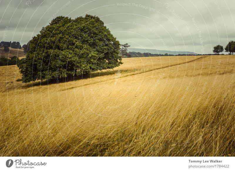 Oak in field Couple Nature Horizon Summer Autumn Weather Wind Tree Grass Meadow Field Hill Places Monument Walking Love Dream Beautiful holidays Geography