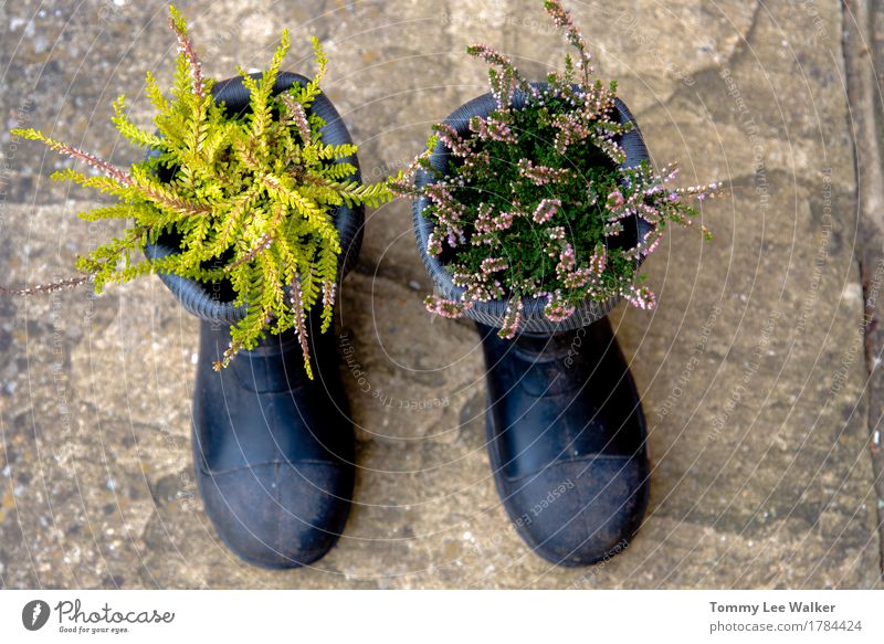 Creative garden Lifestyle Garden Gardening Nature Plant Flower Grass Blossom Places Clothing Boots Rubber boots Stone Black Emotions Colour Idea Creativity