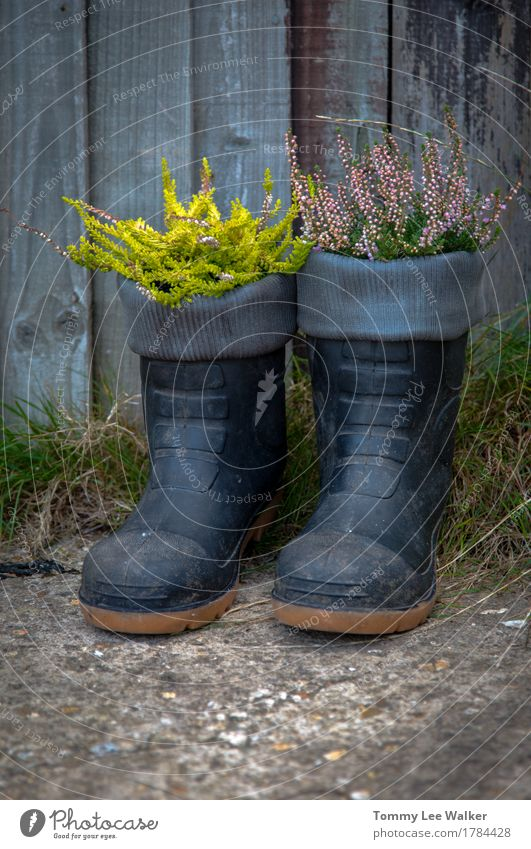 Creative garden pots Lifestyle Garden Gardening Nature Plant Flower Grass Blossom Places Clothing Boots Rubber boots Stone Black Emotions Colour Idea Creativity