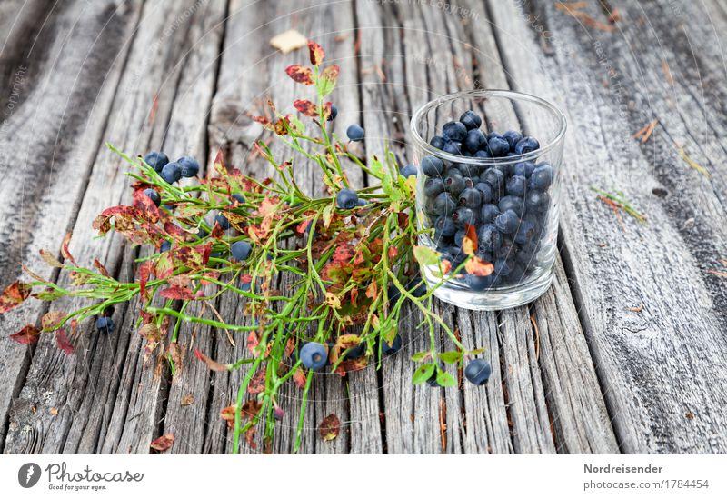 blueberries Food Fruit Nutrition Organic produce Vegetarian diet Glass Leisure and hobbies Trip Nature Summer Autumn Wild plant Forest Wood Friendliness Fresh