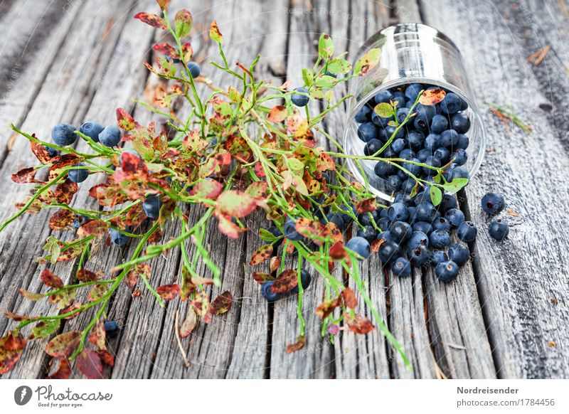 blueberry season Fruit Nutrition Picnic Organic produce Vegetarian diet Finger food Glass Trip Table Bushes Wood Positive Appetite Leisure and hobbies To enjoy