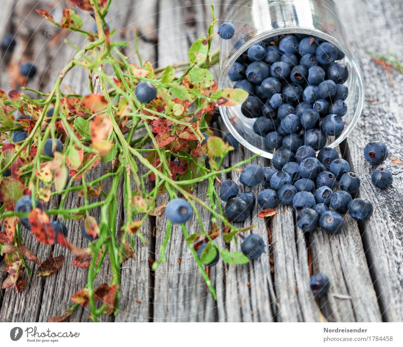 blueberries Food Fruit Nutrition Organic produce Vegetarian diet Glass Leisure and hobbies Trip Nature Plant Wild plant Forest Wood Eating Fresh Healthy