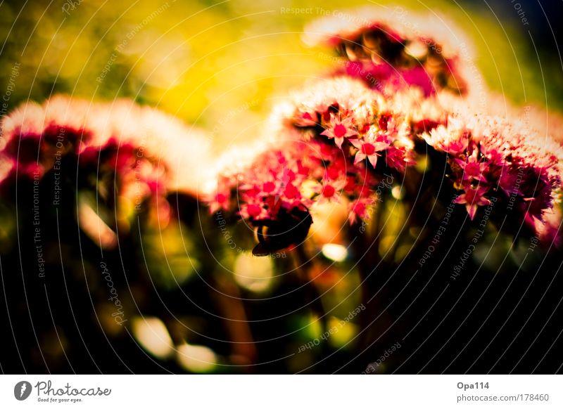 flower dream Colour photo Multicoloured Exterior shot Close-up Detail Macro (Extreme close-up) Deserted Copy Space bottom Day Evening Light Shadow Contrast