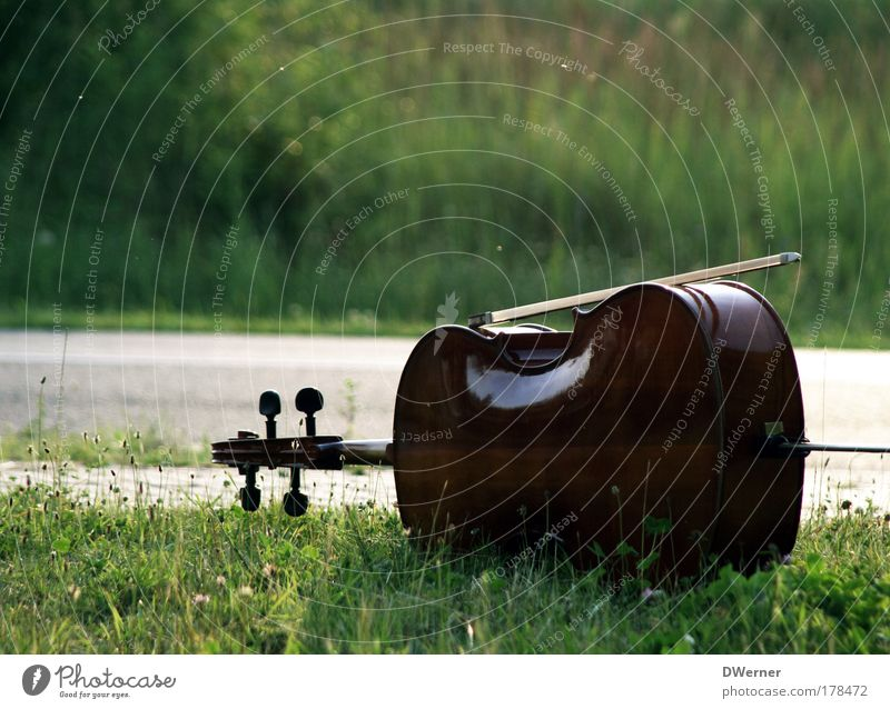 The Violoncello Colour photo Exterior shot Copy Space top Day Light Music Violin Grass Garden Park Meadow Street Playing Education Joy Style Moody violoncello